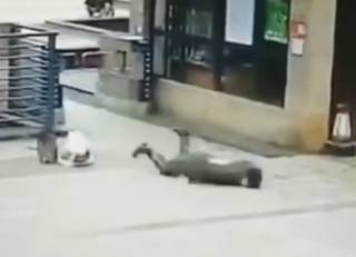 Из-за коронавируса в Китае люди падают прямо на улицах (18+)