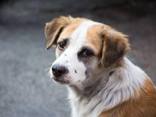 На родине Зеленского полицейский наколол на вилы собаку и бросил ее в костер