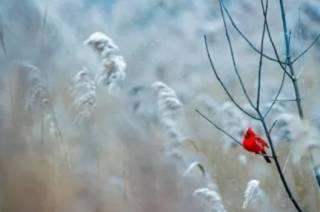 Синоптики сравнили нынешнюю погоду в Украине с разгаром весны