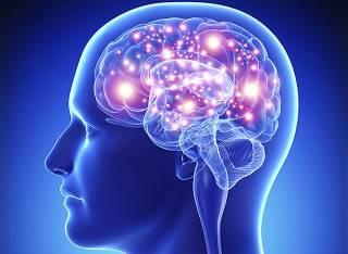 Исследователи рассказали, как затормозить старение мозга