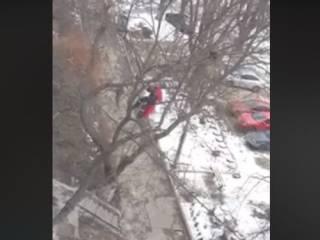 На Борщаговке «всем миром» спасали кота, который забрался на высоченное дерево