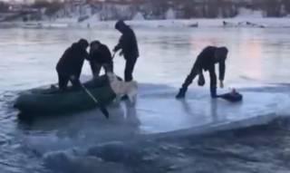 Трое на льдине, не считая собаки: на Камчатке произошло курьезное ЧП