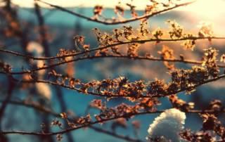 Синоптики рассказали, когда в Украину придет настоящая весна