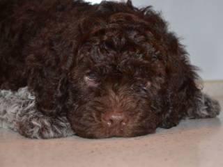 Ученые назвали самую пугливую породу собак