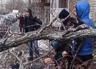 В Харькове дерево убило человека