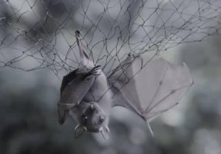 Болезни животных становятся человеческими. Как уничтожение экосистемы приводит к новым эпидемиям