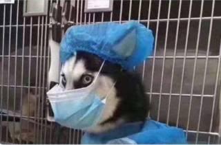 Получен четкий ответ на вопрос, можно ли заразиться коронавирусом от домашних животных