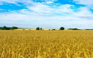 Под покровом ночи Рада сделала украинскую землю товаром