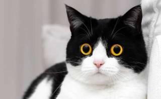 В Гонконге коронавирусом заболел домашний кот