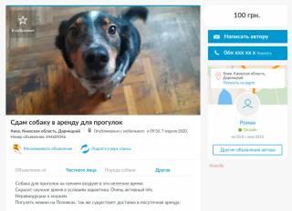 Предприимчивые украинцы массово сдают в аренду своих собак