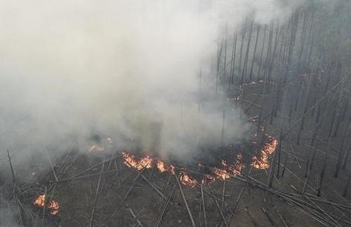 В Чернобыльской зоне потушили масштабный пожар