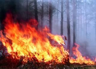 В Чернобыльской зоне и Житомирской области продолжаются лесные пожары