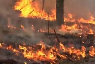 Пожар в Чернобыльской зоне тушат уже девять дней и никак не могут погасить