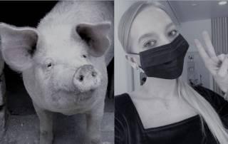 Свиноферма «Украина», или Почему депутаты сняли медицинские маски