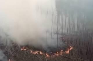 Пожар в Чернобыльской зоне: что известно на утро 14 апреля