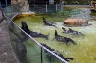 В пустующем немецком зоопарке одни животные съедят других