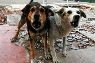 Канадские ученые назвали бродячих собак «переносчиками коронавируса»
