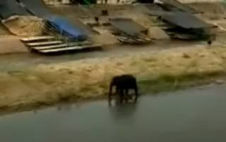 Сумасшедшая слониха убила крестьянина в Таиланде: очевидцы показали жуткие кадры (18+)