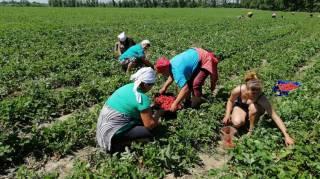 Евросоюз готовится открыть границы для части украинских заробитчан. Кого впустят?