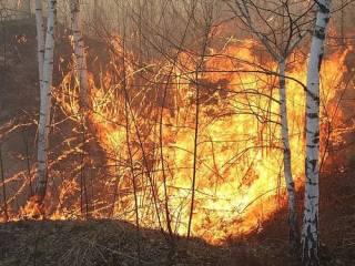 На Житомирщине разгорелся масштабный лесной пожар