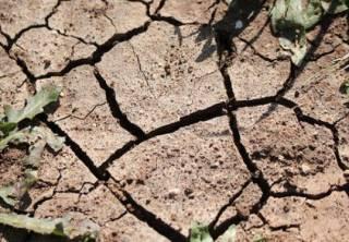 Аномальная засуха в Чехии: власти страны говорят, что такого не было пятьсот лет