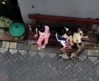 В Индонезии злодеи пытались похитить ребенка с помощью… обезьяны-мотоциклиста
