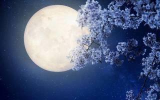 Стало известно, когда украинцы увидят опасную «цветочную Луну»