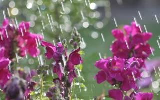 Погода в Украине: синоптики предупредили о затяжных дождях
