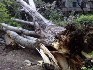 В Харькове деревья продолжают падать на людей
