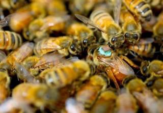 В Тернопольской области мужчину насмерть закусали пчелы