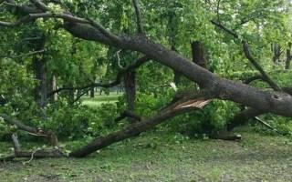 По Чернигову пронесся ураган – его сняли очевидцы