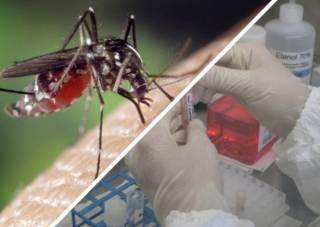 Биологическая война: Пентагон, насекомые и вакцинация