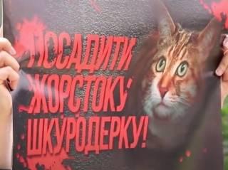 Зоозащитники принесли херсонским полицейским… мертвую кошку (18+)