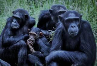 Массовое вымирание: 500 видов животных вскоре исчезнут с лица Земли