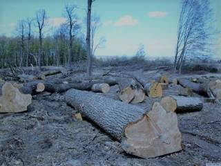 Про потоп на западной Украине, бесконтрольную вырубку лесов и старые гуцульские грабли