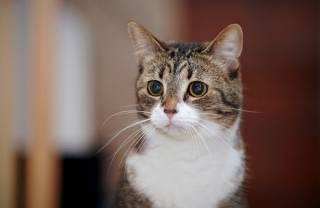 В Австралии старушка умерла после «поцелуя» кошки