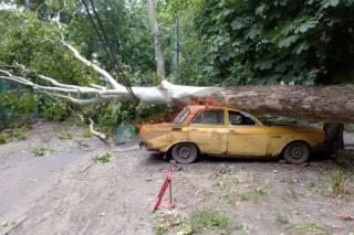Сильный ветер повалил более полусотни деревьев в Одессе