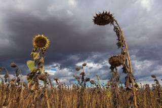 Стало известно, как глобальное потепление сказалось на погоде в Украине