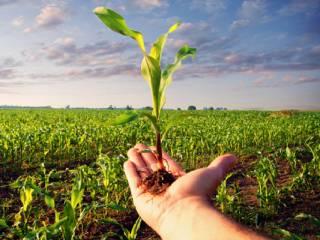 В Украине рухнуло производство сельхозпродукции