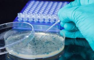 Биологи совершенно случайно обнаружили странные бактерии, которые едят металл