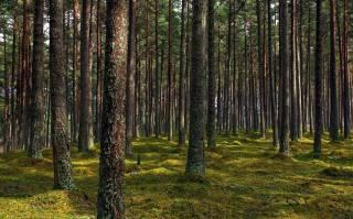 В ООН рассказали о катастрофических масштабах гибели мировых лесов