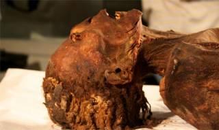 Тайна «кричащей» мумии была разгадана египтянами