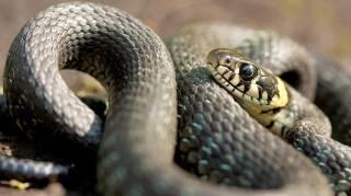 На Львовщине змея атаковала 6-летнего ребенка