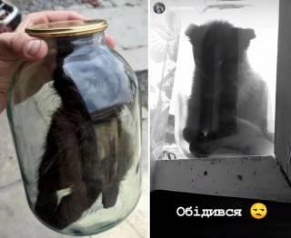 На Прикарпатье молодой парень «закатал» кота в трехлитровую банку