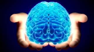 Ученые нашли в мозгу «сексуальные клетки»