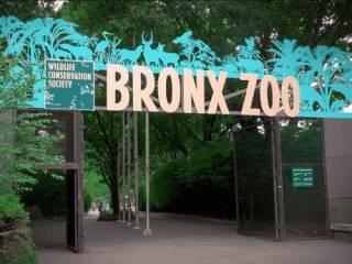 В США извинились за негра, которого выставляли в качестве обитателя зоопарка