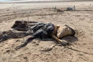 Жители одного из английских графств нашли на берегу тушу очень странного глобстера