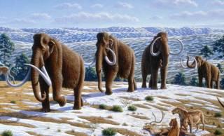 Стало известно, что стало причиной резкого похолодания, от которого вымерли мамонты