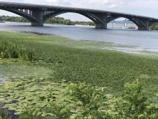 Днепр серьезно болен: что происходит с крупнейшей рекой, дающей украинцам 2/3 питьевой воды