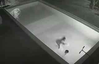 Появилось видео, как маленькая девочка спасла тонущего мальчика в Крыму